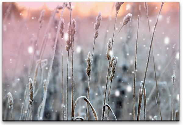 Winterpflanzen Wandbild in verschiedenen Größen