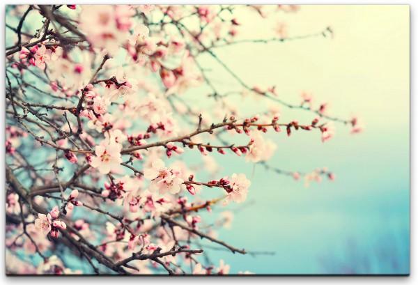 pinke Frühlingsblume Wandbild in verschiedenen Größen