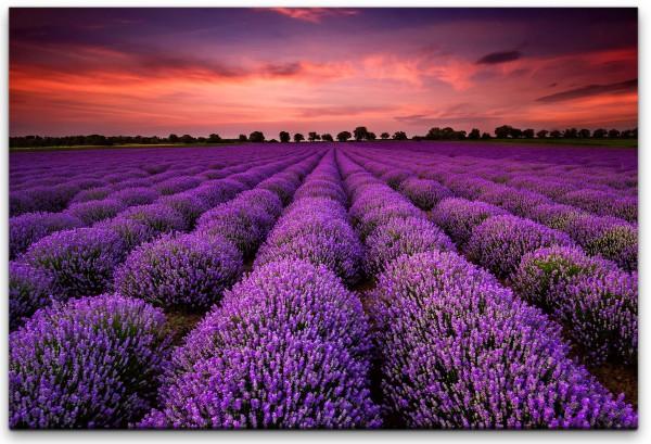 Lavendel Wandbild in verschiedenen Größen