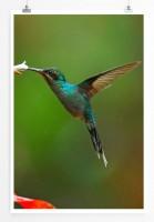 60x90cm Poster Tierfotografie – Kolibri auf Nektarsuche
