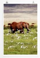 60x90cm Poster Tierfotografie – Afrikanischer Elefant im Vogelschwarm