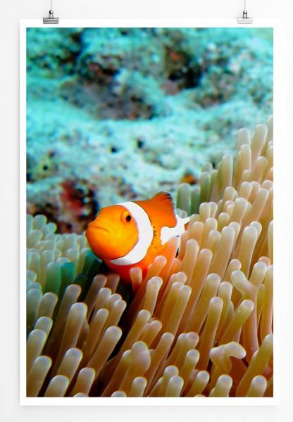 60x90cm Poster Naturfotografie – Clownfisch im Korallenriff
