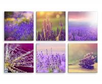 6 teiliges Leinwandbild je 30x30cm -  Lavendel Blumen Spinnennetz Sonne