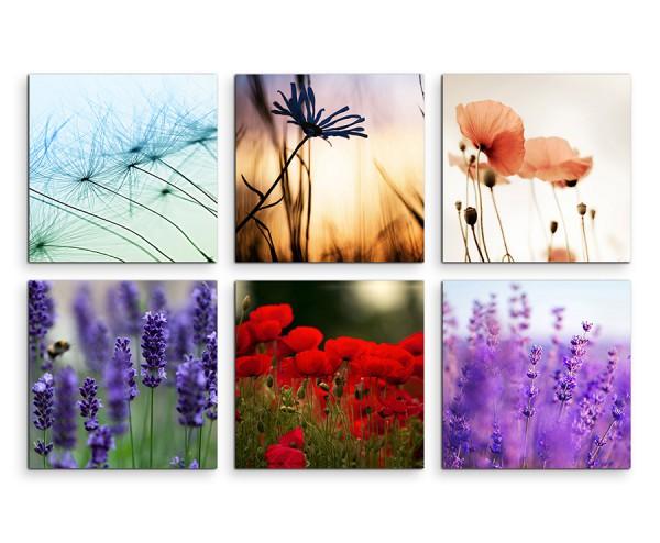 6 teiliges Leinwandbild je 30x30cm -  Lavendel Mohnblumen Pusteblume Löwenzahn Makroaufnahme