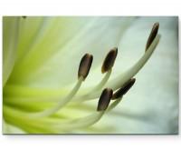 Weiße Taglilie – Makroaufnahme - Leinwandbild