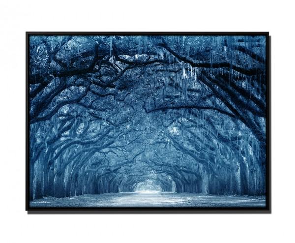 105x75cm Leinwandbild Petrol Bäume Moos Savannah Georgia