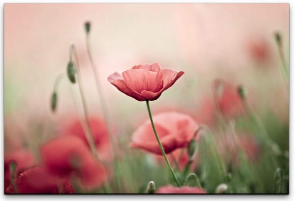 Pinke Blume Wandbild in verschiedenen Größen