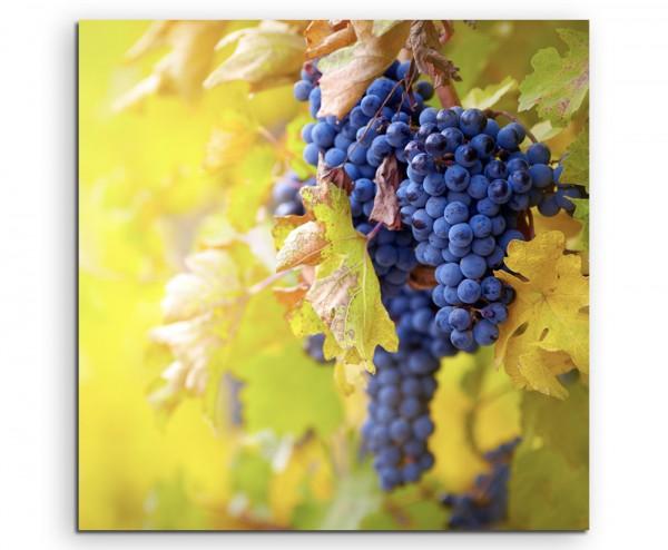 Naturfotografie – Blaue Weintrauben mit gelben Blättern auf Leinwand