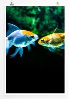 60x90cm Poster Tierfotografie – Zwei verschiedenfarbige Goldfische