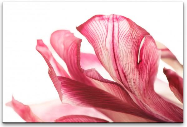 Tulpe Wandbild in verschiedenen Größen