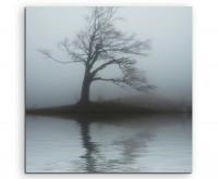 Naturfotografie –  Einsamer Baum in grauer Nebenllandschaft auf Leinwand