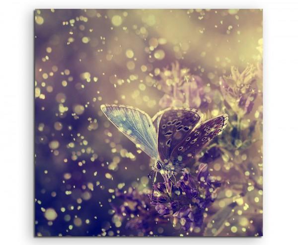 Naturfotografie –  Schmetterling im regen auf Leinwand