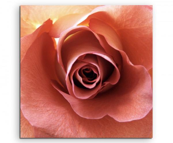 Naturfotografie – Lachsfarbene romantische Rose auf Leinwand