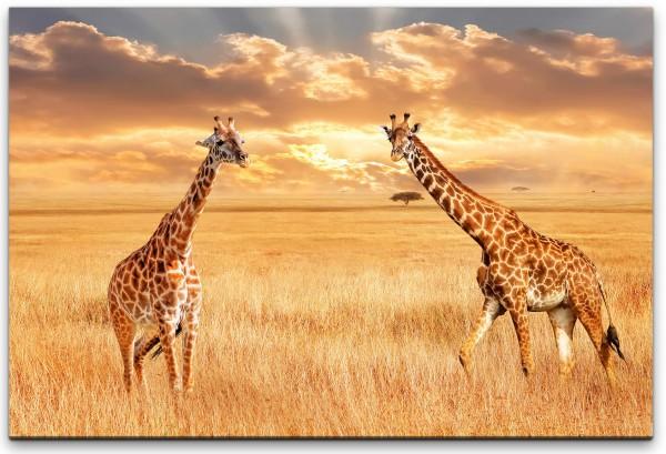 Giraffen in der Savanne Wandbild in verschiedenen Größen