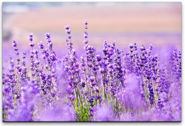 Lavendelfelder Wandbild in verschiedenen Größen