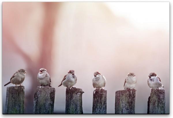 Vögel auf Holzstämmen Wandbild in verschiedenen Größen