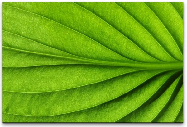 grünes Blatt Wandbild in verschiedenen Größen