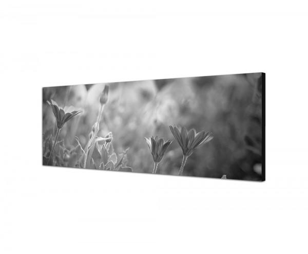 150x50cm Blumen Wiese Frühling Licht