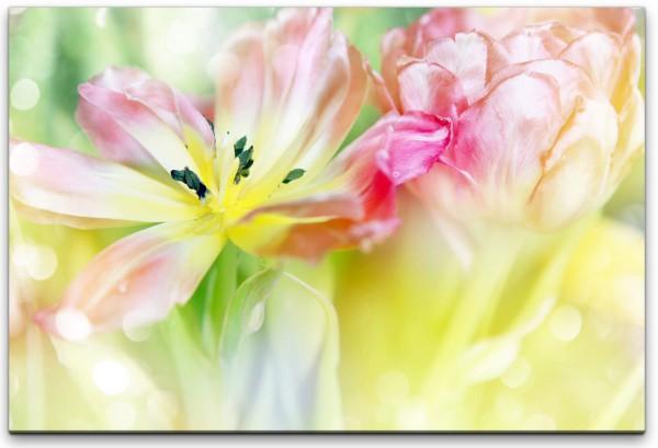 zarte Tulpenblüten Wandbild in verschiedenen Größen