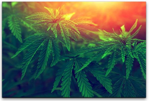 Marihuana Wandbild in verschiedenen Größen