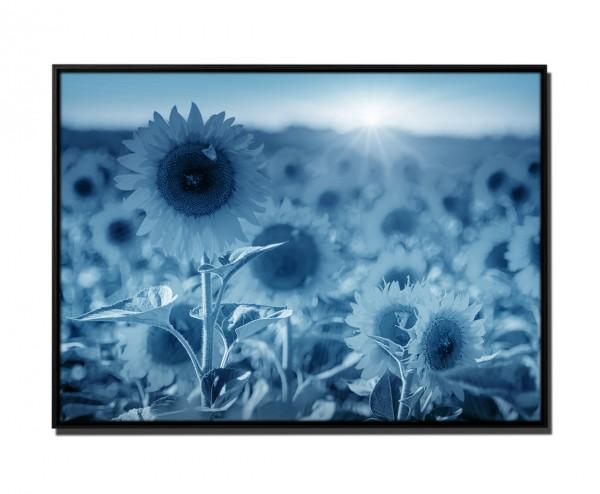 105x75cm Leinwandbild Petrol Sonnenblumenfeld