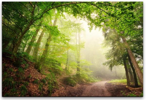 Wald mit Waldweg Wandbild in verschiedenen Größen