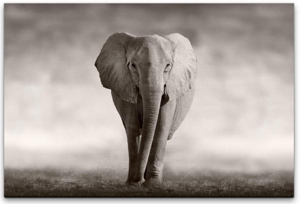 Afrikanischer Elefant Wandbild in verschiedenen Größen