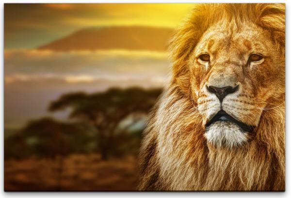 Löwenportrait Wandbild in verschiedenen Größen