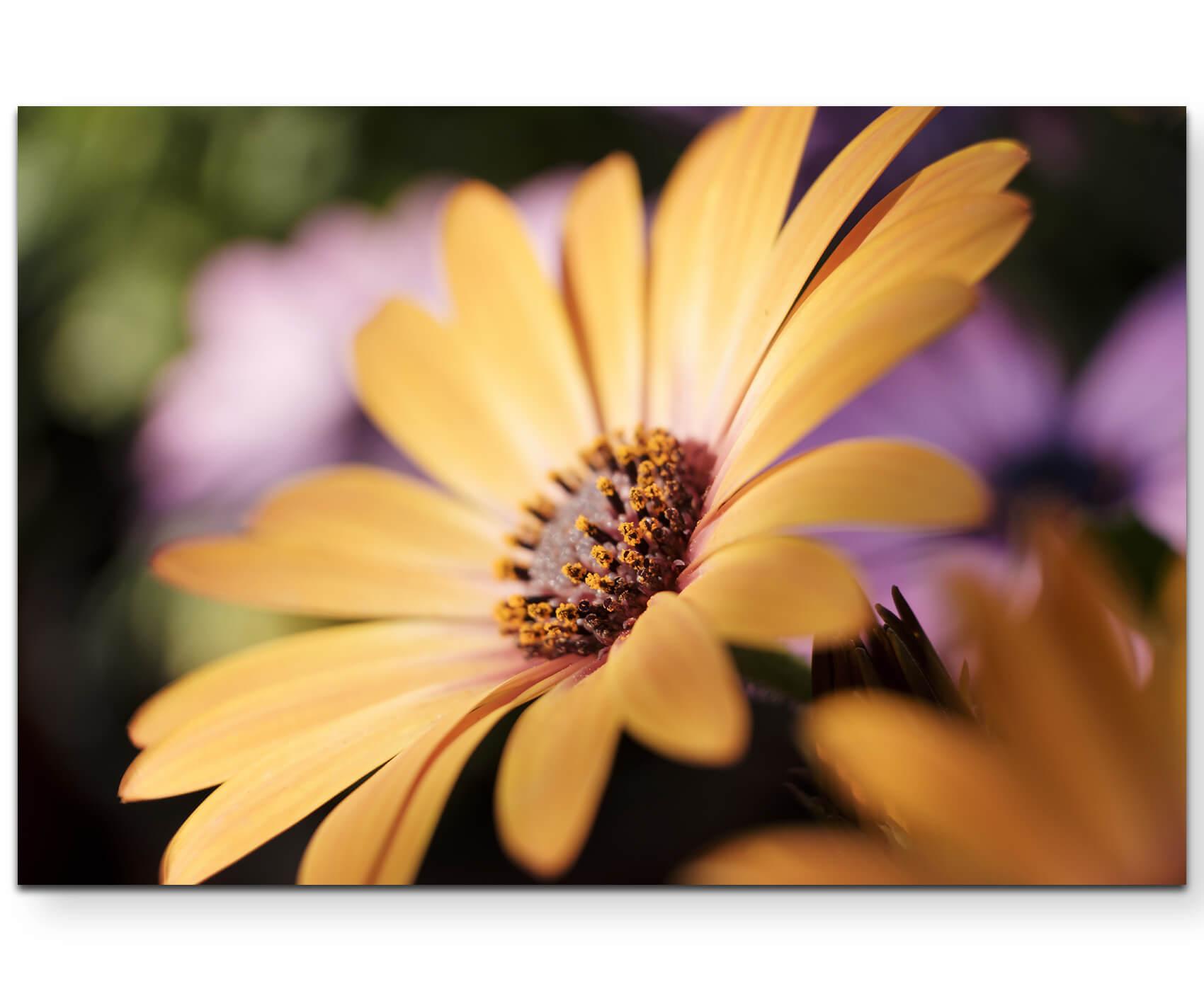 120x40cm Feld Sonnenblumen blauer Himmel Agrar Keilrahmen Leinwand Sinus Art