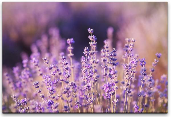 Lavendel Nahaufnahme Wandbild in verschiedenen Größen