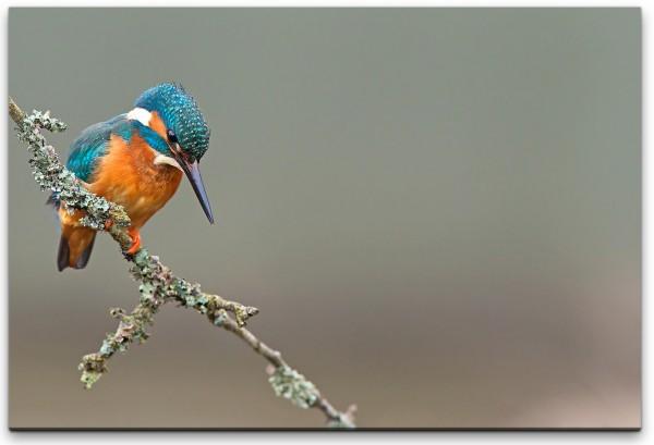 Vogel Wandbild in verschiedenen Größen