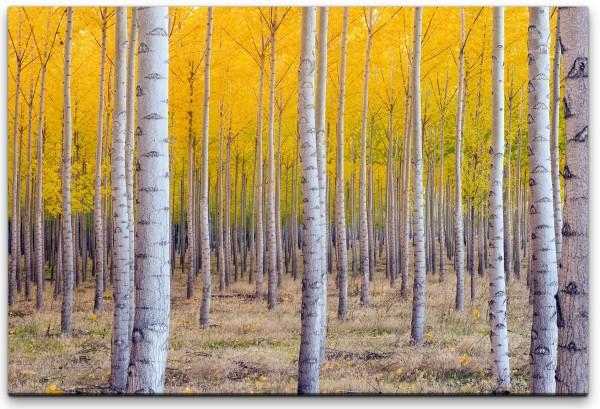 Herbst Birke Wandbild in verschiedenen Größen