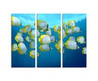 130x90cm Fische Meer Unterwasser Karibik Falterfische