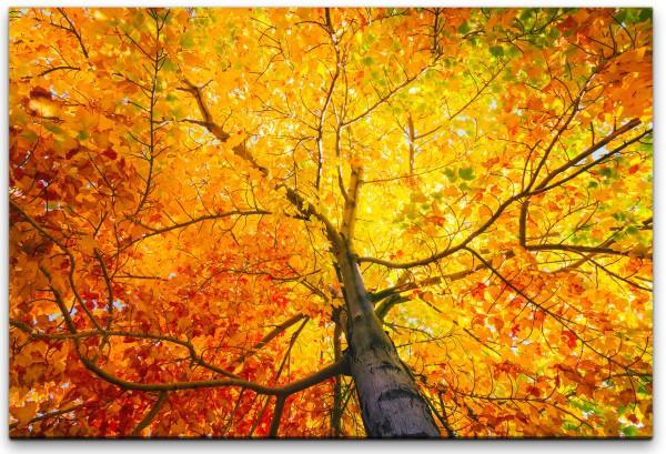 Baum mit bunten Blättern Wandbild in verschiedenen Größen