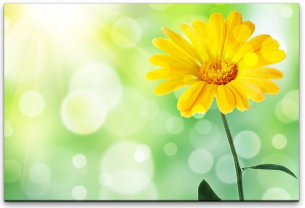 gelbe Blume Wandbild in verschiedenen Größen