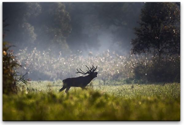 Hirsch im Wald Wandbild in verschiedenen Größen