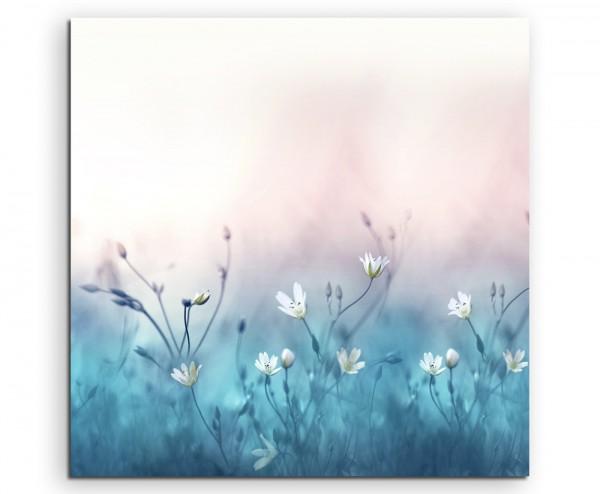 Naturfotografie Wiese Mit Weissen Blumen Auf Leinwand Exklusives Wandbild Moderne Fotografie Fur Ih