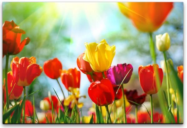 bunte Tulpen Wandbild in verschiedenen Größen