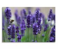120x80cm Wandbild Lavendel Blumen Feld