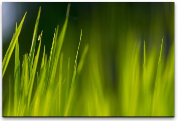 grünes Grass Wandbild in verschiedenen Größen