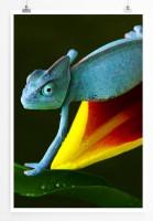 60x90cm Tierfotografie Poster Blaue Echse