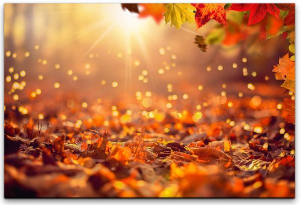 Herbstwald mit Sonnenuntergang Wandbild in verschiedenen Größen