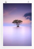 60x90cm Poster Landschaftsfotografie – Einsamer Baum im Nebel