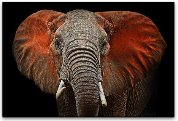 Elefanten Wandbild in verschiedenen Größen