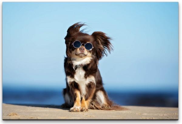 Hund mit Sonnenbrille Wandbild in verschiedenen Größen