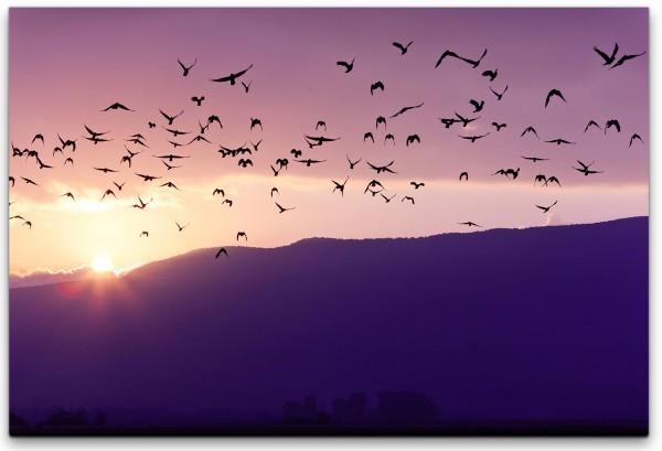 Vogelschwarm im Sonnenuntergang Wandbild in verschiedenen Größen