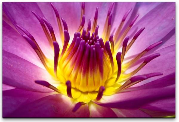 Lotusblume Wandbild in verschiedenen Größen
