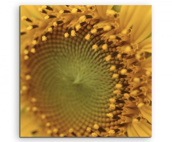 Naturfotografie – Sonnenblumen auf Leinwand exklusives Wandbild moderne Fotografie für ihre Wand in