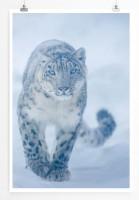 60x90cm Poster Tierfotografie – Schneeleopard auf dem Weg