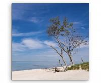 Landschaftsfotografie –  Baum am Baltischen Meer auf Leinwand exklusives Wandbild moderne Fotografie